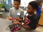 6th grader Maxwell H. (left) and 3rd grade buddy Carter F. dissect a lilly