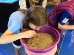 Sieving pay dirt